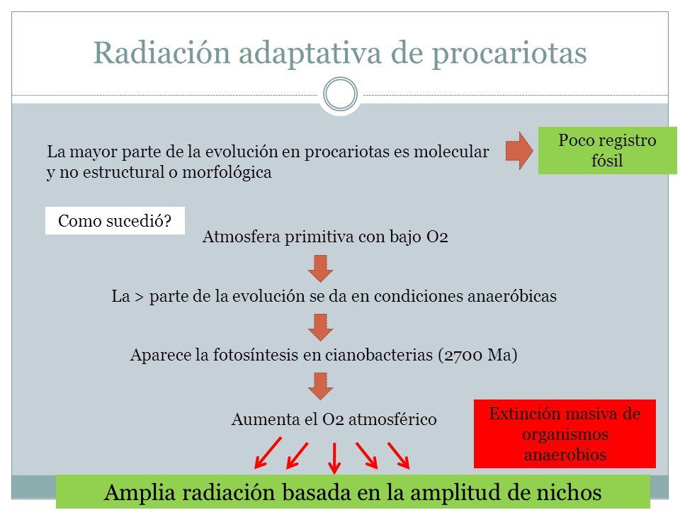 Radiación adaptativa de procariotas La mayor parte de la evolución en procariotas es molecular y no estructural o morfológica Poco registro fósil Como sucedió.