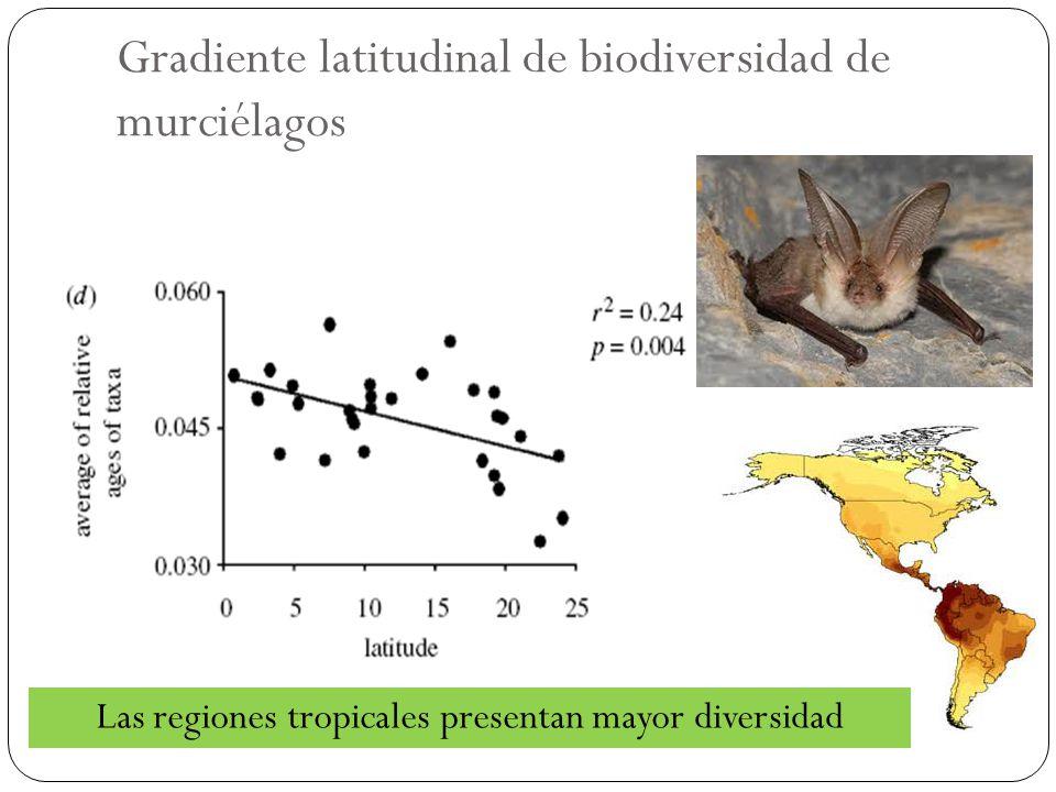 Gradiente latitudinal de biodiversidad de murciélagos Las regiones tropicales presentan mayor diversidad