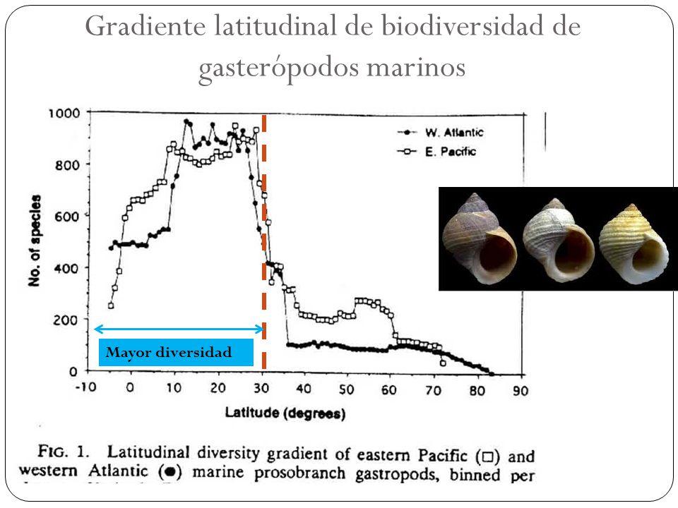 Gradiente latitudinal de biodiversidad de gasterópodos marinos Mayor diversidad