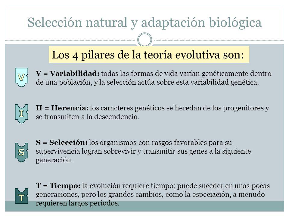 Selección natural y adaptación biológica la selección. V = Variabilidad: todas las formas de vida varían genéticamente dentro de una población, y la s