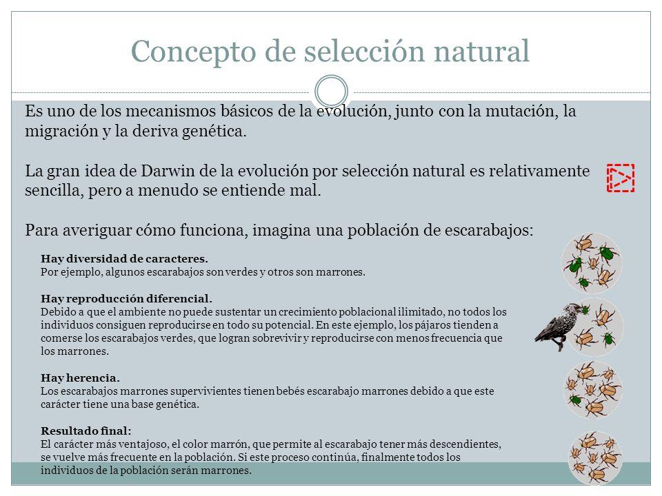 Concepto de selección natural Es uno de los mecanismos básicos de la evolución, junto con la mutación, la migración y la deriva genética. La gran idea