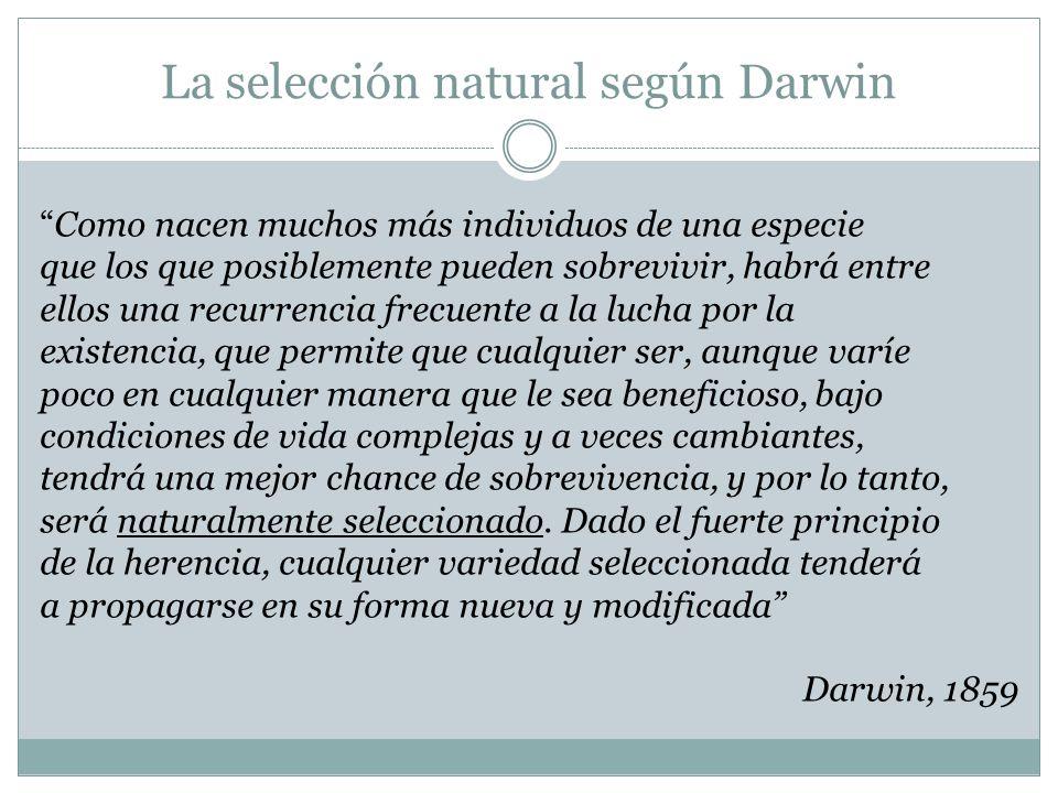 La selección natural según Darwin Como nacen muchos más individuos de una especie que los que posiblemente pueden sobrevivir, habrá entre ellos una re