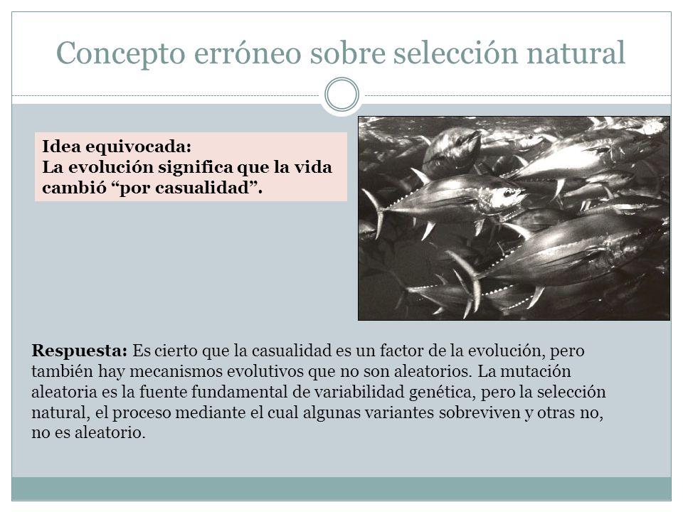 Concepto erróneo sobre selección natural Idea equivocada: La evolución significa que la vida cambió por casualidad.