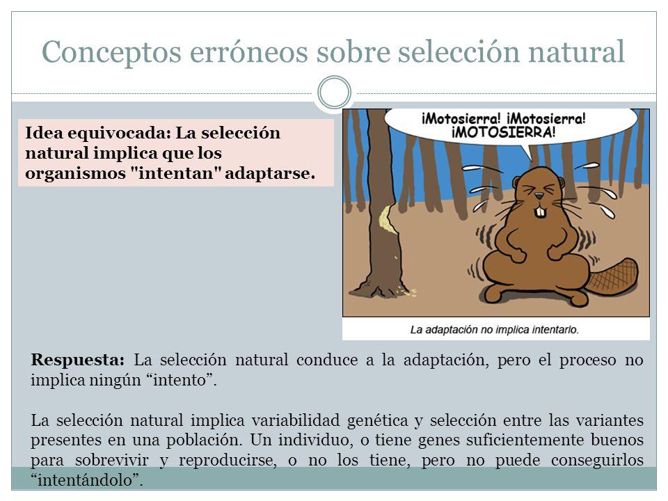 Conceptos erróneos sobre selección natural Idea equivocada: La selección natural implica que los organismos intentan adaptarse.