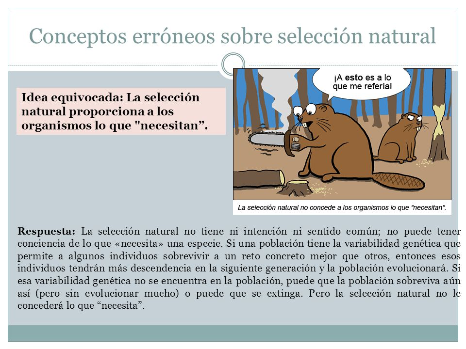 Conceptos erróneos sobre selección natural Respuesta: La selección natural no tiene ni intención ni sentido común; no puede tener conciencia de lo que «necesita» una especie.