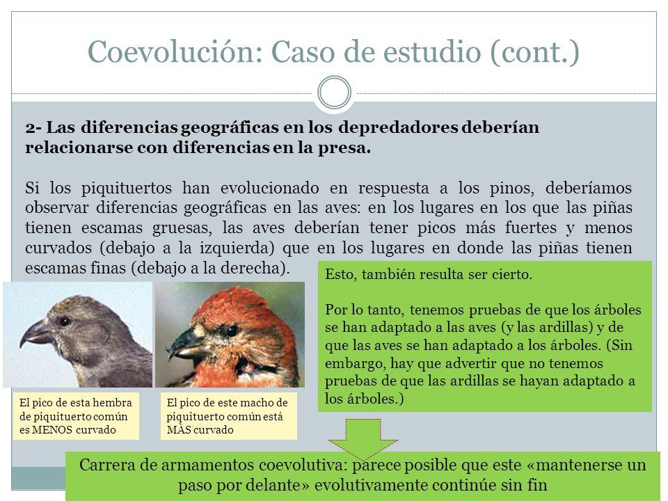 Coevolución: Caso de estudio (cont.) 2- Las diferencias geográficas en los depredadores deberían relacionarse con diferencias en la presa. Si los piqu