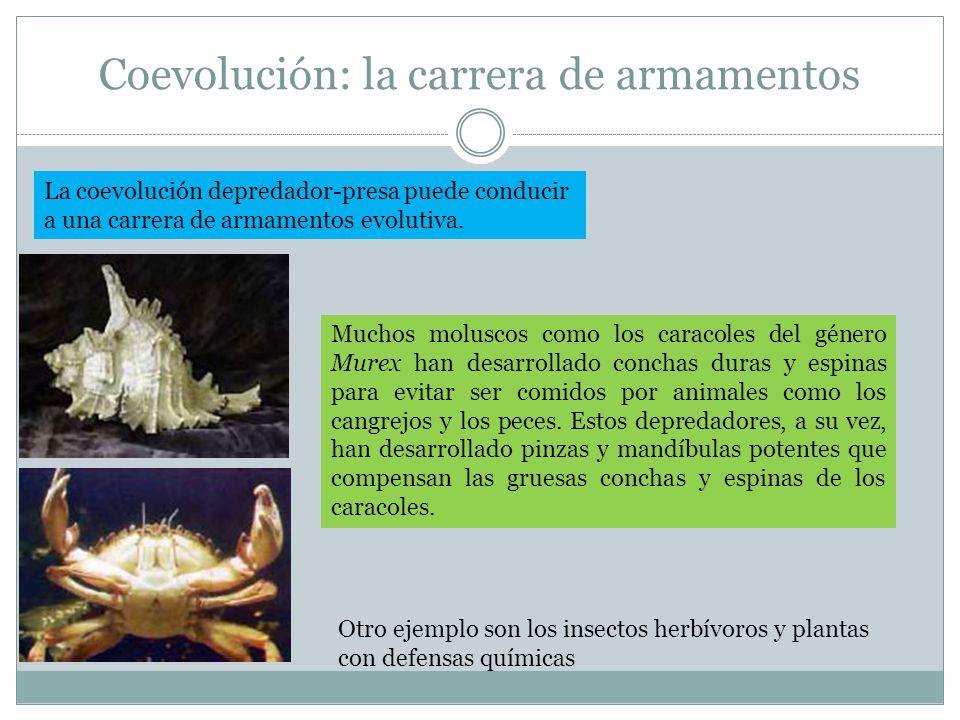 Coevolución: la carrera de armamentos La coevolución depredador-presa puede conducir a una carrera de armamentos evolutiva. Muchos moluscos como los c