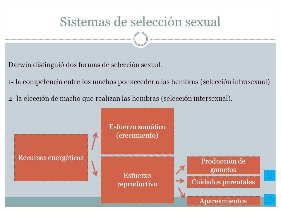 Sistemas de selección sexual Darwin distinguió dos formas de selección sexual: 1- la competencia entre los machos por acceder a las hembras (selección intrasexual) 2- la elección de macho que realizan las hembras (selección intersexual).
