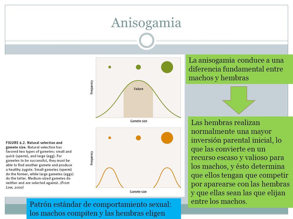 Anisogamia La anisogamia conduce a una diferencia fundamental entre machos y hembras Las hembras realizan normalmente una mayor inversión parental ini