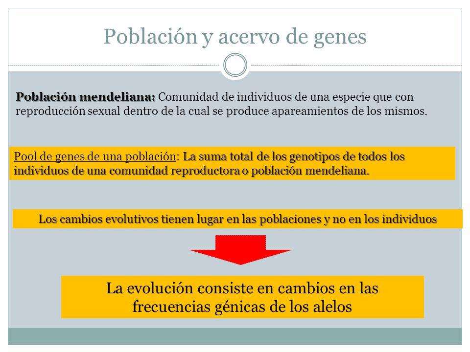 Población y acervo de genes Población mendeliana: Población mendeliana: Comunidad de individuos de una especie que con reproducción sexual dentro de la cual se produce apareamientos de los mismos.