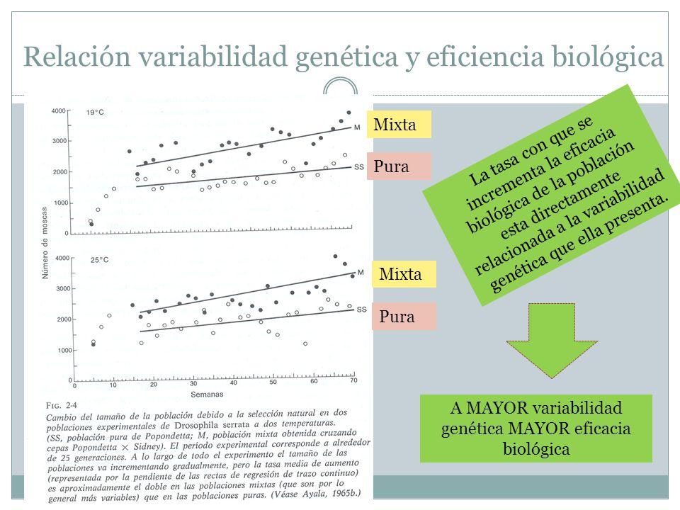 Mixta Pura Mixta Pura Relación variabilidad genética y eficiencia biológica La tasa con que se incrementa la eficacia biológica de la población esta directamente relacionada a la variabilidad genética que ella presenta.