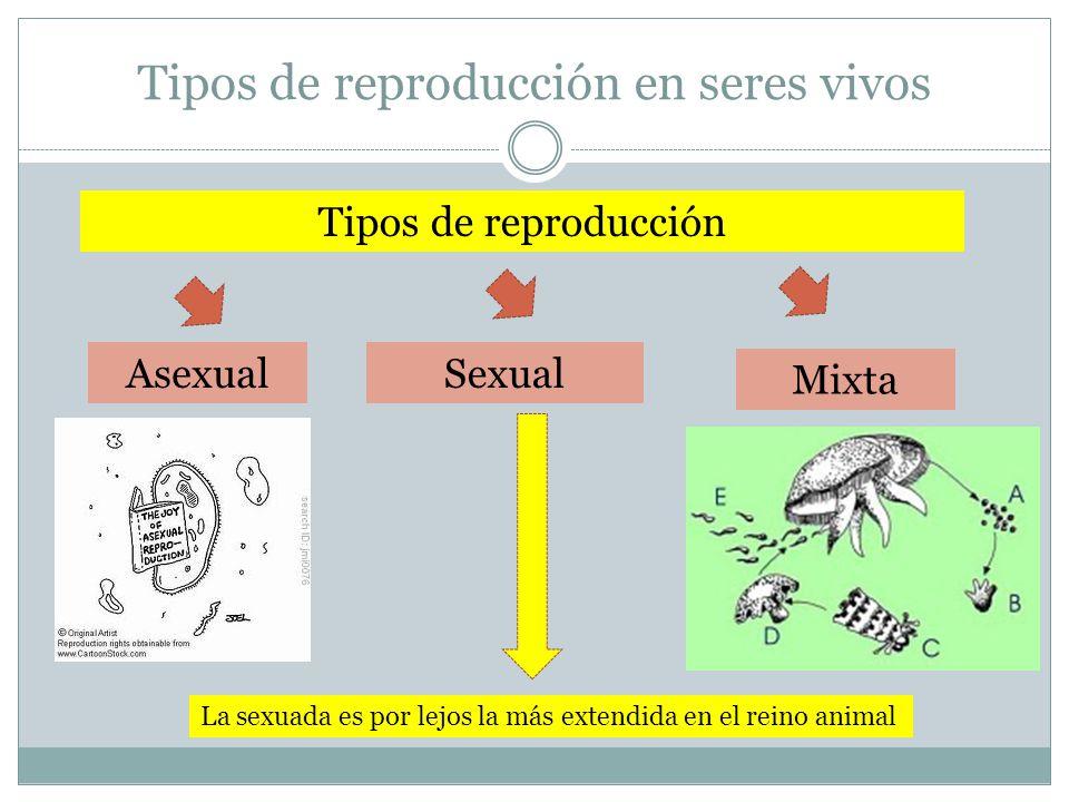 Tipos de reproducción en seres vivos Sexual Mixta Asexual La sexuada es por lejos la más extendida en el reino animal Tipos de reproducción