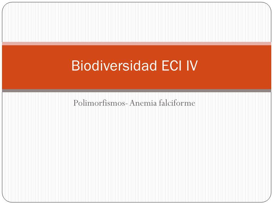 Polimorfismos- Anemia falciforme Biodiversidad ECI IV
