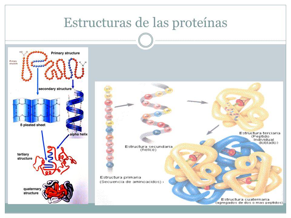 Estructuras de las proteínas