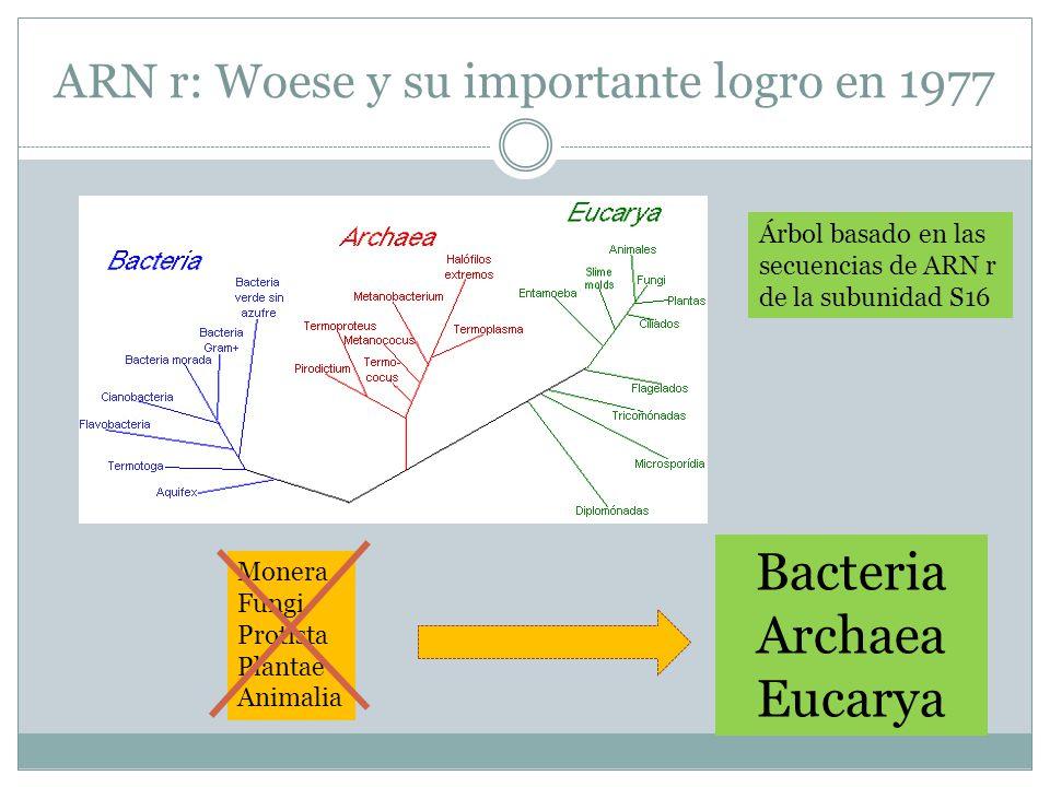 ARN r: Woese y su importante logro en 1977 Monera Fungi Protista Plantae Animalia Bacteria Archaea Eucarya Árbol basado en las secuencias de ARN r de
