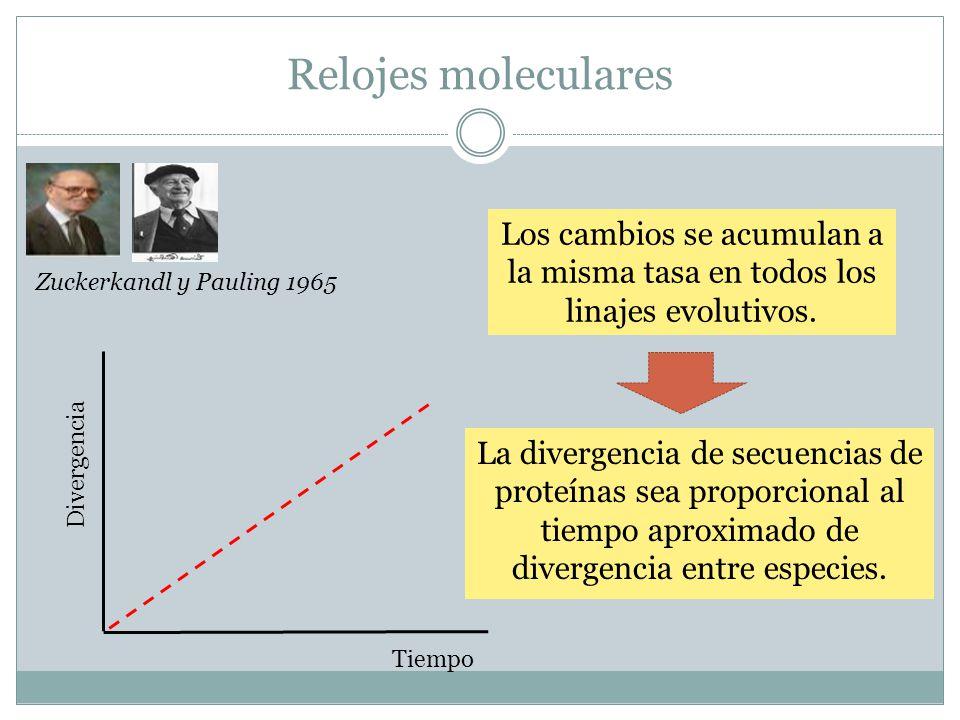 Relojes moleculares Los cambios se acumulan a la misma tasa en todos los linajes evolutivos. Divergencia Tiempo Zuckerkandl y Pauling 1965 La divergen