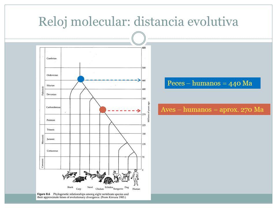 Reloj molecular: distancia evolutiva Peces – humanos = 440 Ma Aves – humanos = aprox. 270 Ma