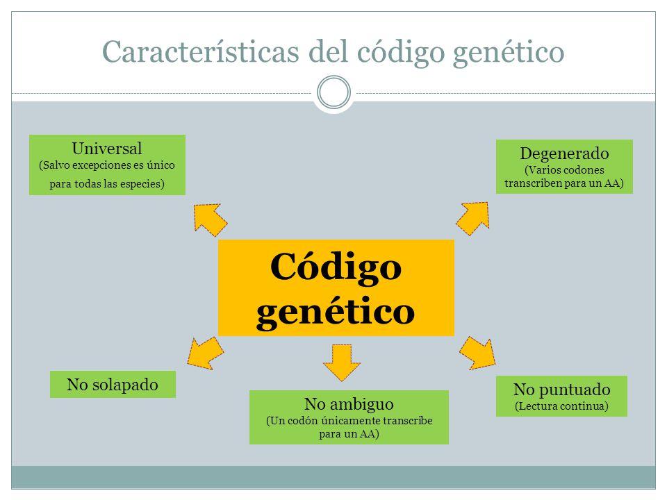 Características del código genético Código genético Universal (Salvo excepciones es único para todas las especies) No solapado No puntuado (Lectura co