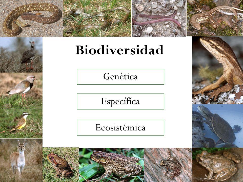 Biodiversidad Específica Genética Ecosistémica