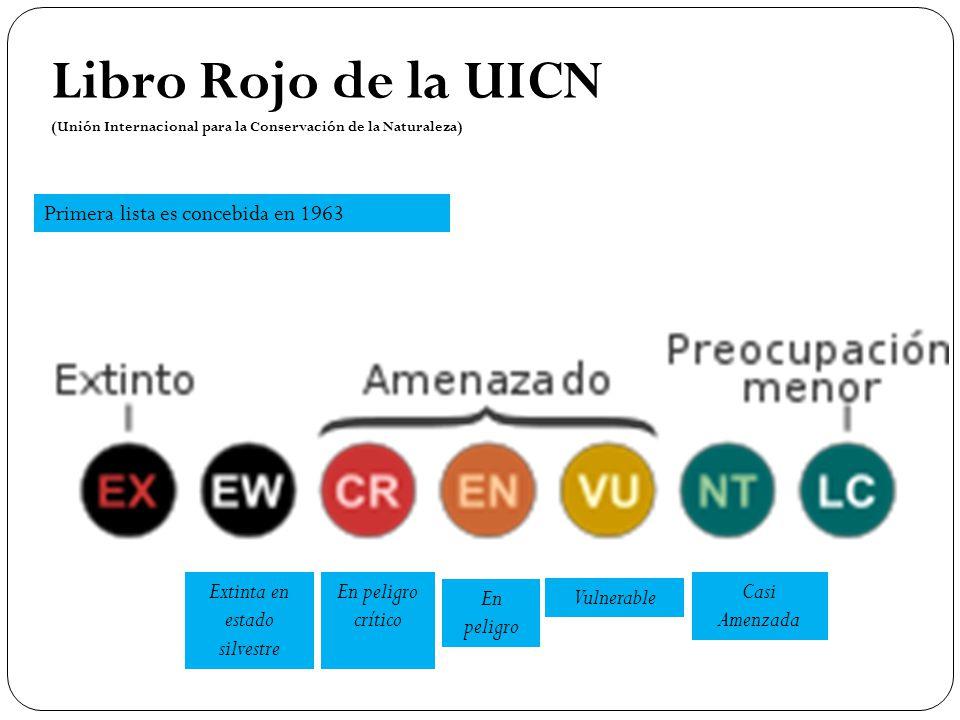 Primera lista es concebida en 1963 Libro Rojo de la UICN (Unión Internacional para la Conservación de la Naturaleza) En peligro crítico Extinta en est