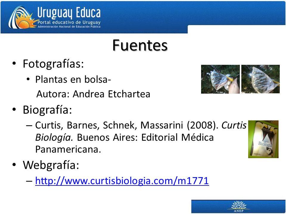 Fuentes Fotografías: Plantas en bolsa- Autora: Andrea Etchartea Biografía: – Curtis, Barnes, Schnek, Massarini (2008).