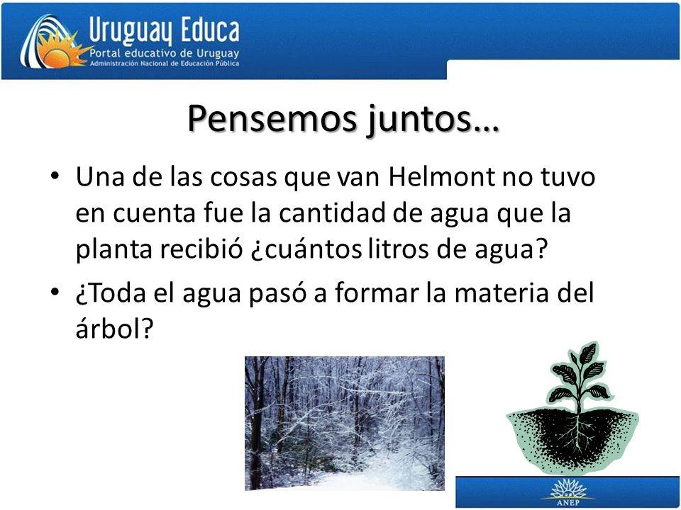 Parte del agua que absorbe una planta se puede evaporar Realiza la siguiente prueba: – Elige la rama de cualquier árbol o una planta pequeña.