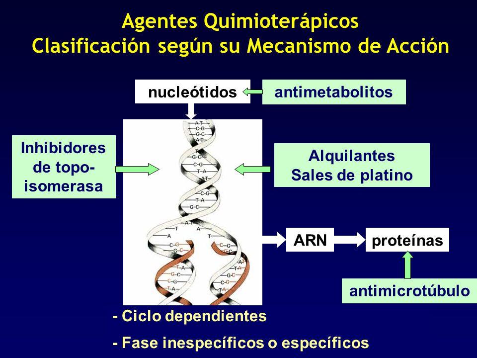 ARNproteínas nucleótidos Agentes Quimioterápicos Clasificación según su Mecanismo de Acción antimetabolitosAlquilantes Sales de platino Inhibidores de