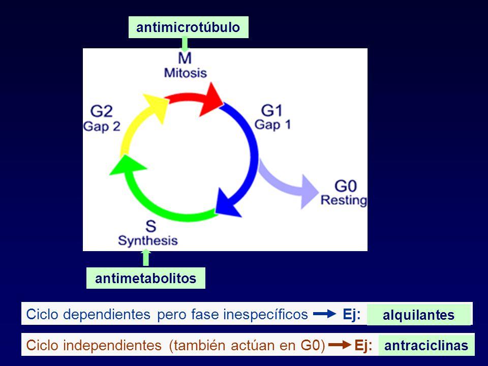 antimetabolitos antimicrotúbulo Ciclo dependientes pero fase inespecíficos Ej: alquilantes Ciclo independientes (también actúan en G0) Ej: antraciclin
