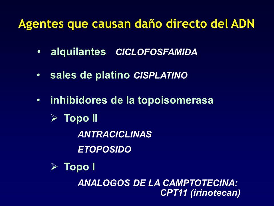 Agentes que causan daño directo del ADN alquilantes CICLOFOSFAMIDA sales de platino CISPLATINO inhibidores de la topoisomerasa Topo II ANTRACICLINAS E