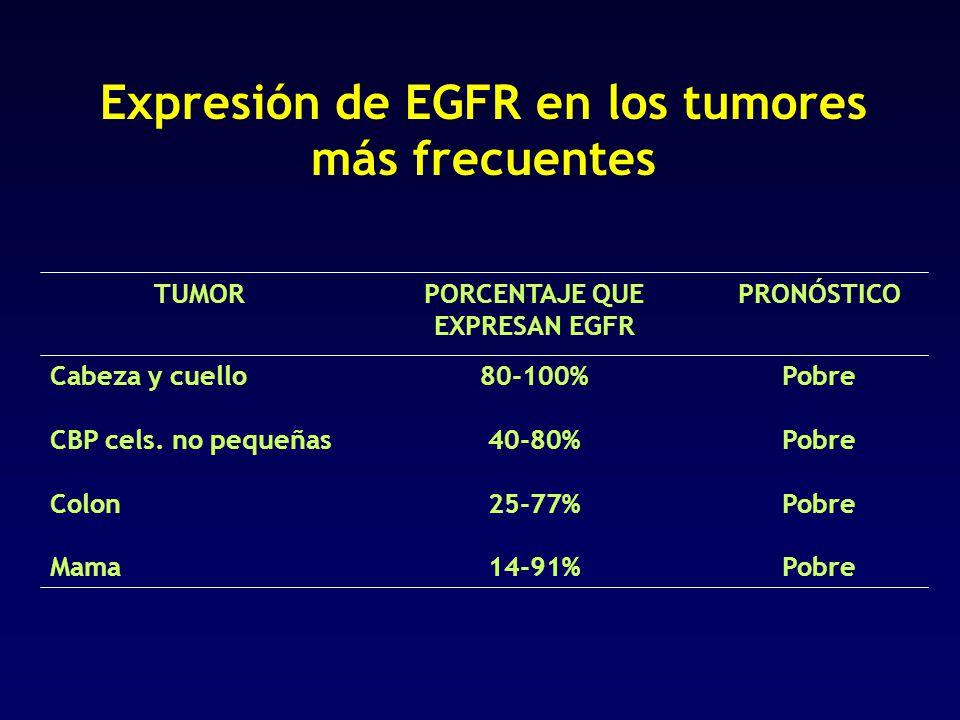 14-91% 25-77% 40-80% 80-100% PORCENTAJE QUE EXPRESAN EGFR Pobre Cabeza y cuello PobreMama Colon CBP cels. no pequeñas PRONÓSTICOTUMOR Expresión de EGF