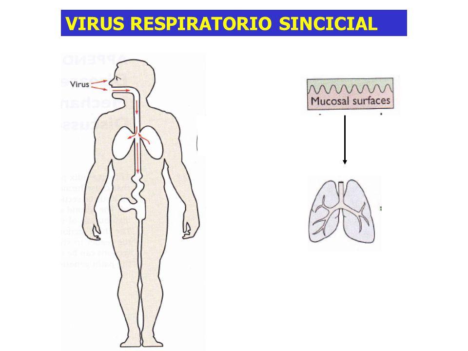 Sindrome Respiratorio Agudo Severo (SARS) Flia Coronaviridae Genoma ARN+ Virus envuelto con glicoproteínas en sup.