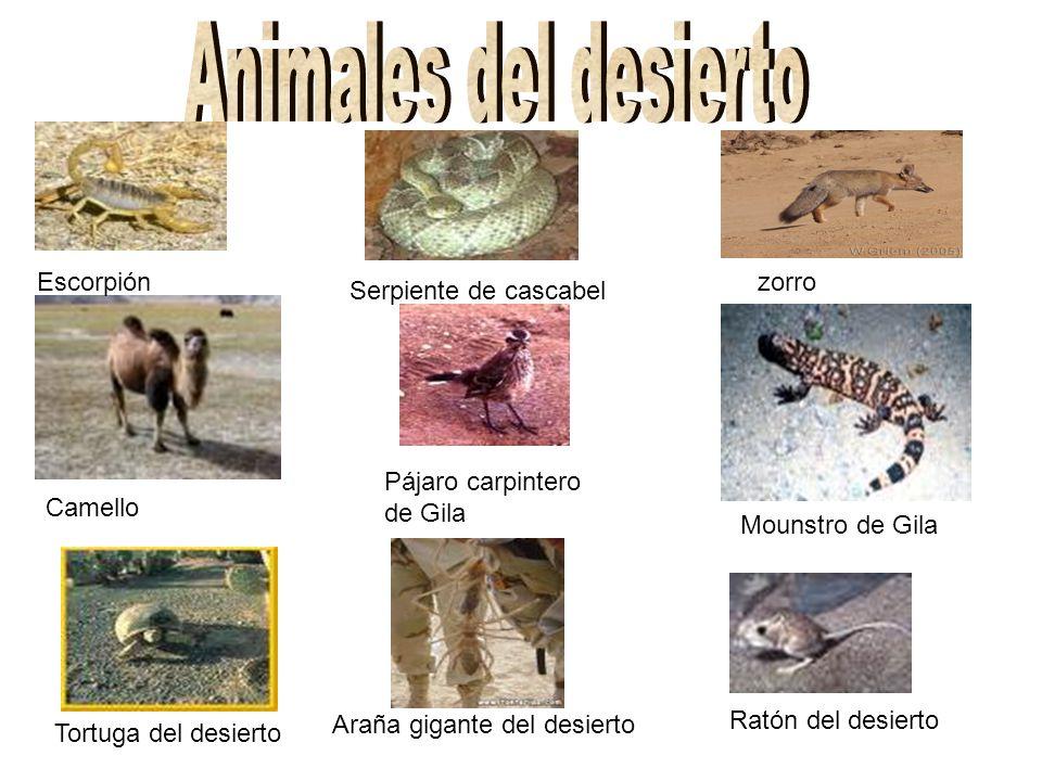 Escorpión Camello zorro Mounstro de Gila Serpiente de cascabel Pájaro carpintero de Gila Tortuga del desierto Araña gigante del desierto Ratón del desierto