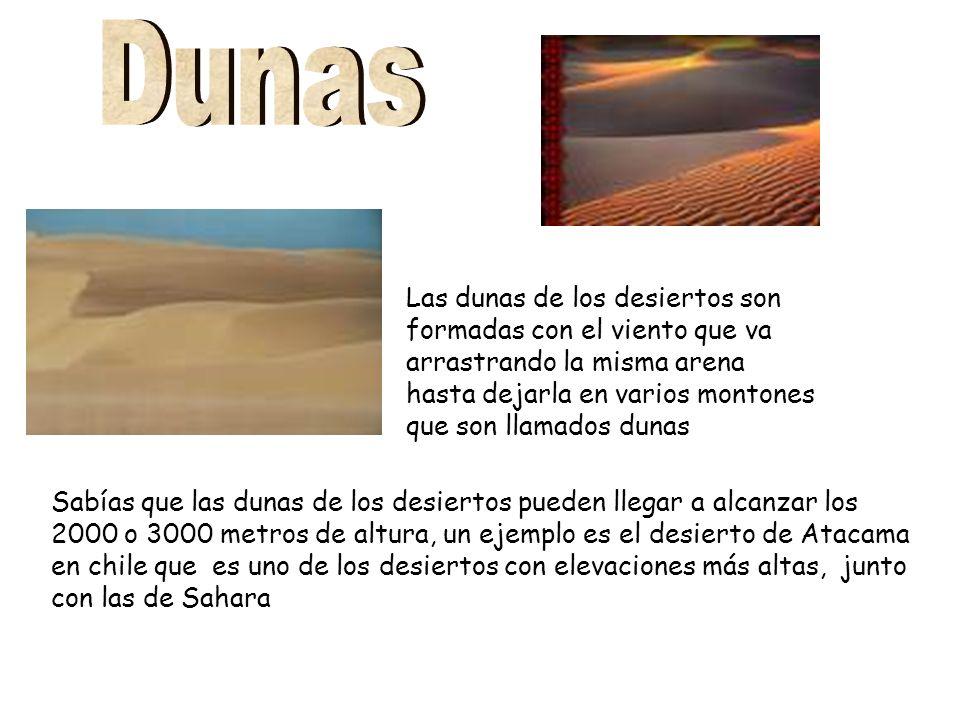 Las dunas de los desiertos son formadas con el viento que va arrastrando la misma arena hasta dejarla en varios montones que son llamados dunas Sabías que las dunas de los desiertos pueden llegar a alcanzar los 2000 o 3000 metros de altura, un ejemplo es el desierto de Atacama en chile que es uno de los desiertos con elevaciones más altas, junto con las de Sahara
