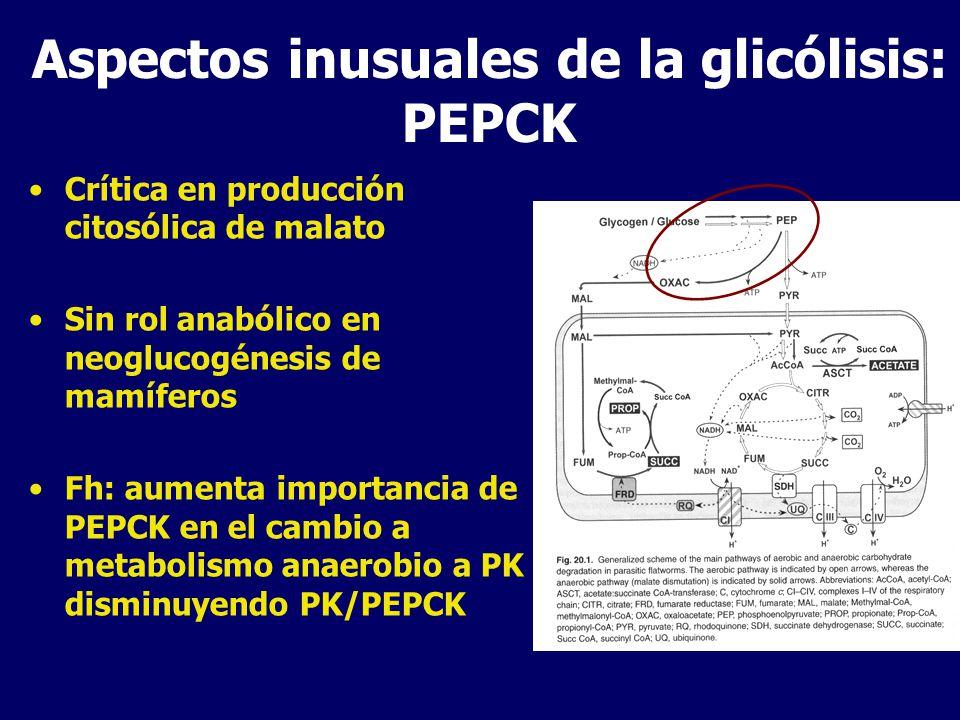 Aspectos inusuales de la glicólisis: PEPCK Crítica en producción citosólica de malato Sin rol anabólico en neoglucogénesis de mamíferos Fh: aumenta importancia de PEPCK en el cambio a metabolismo anaerobio a PK disminuyendo PK/PEPCK