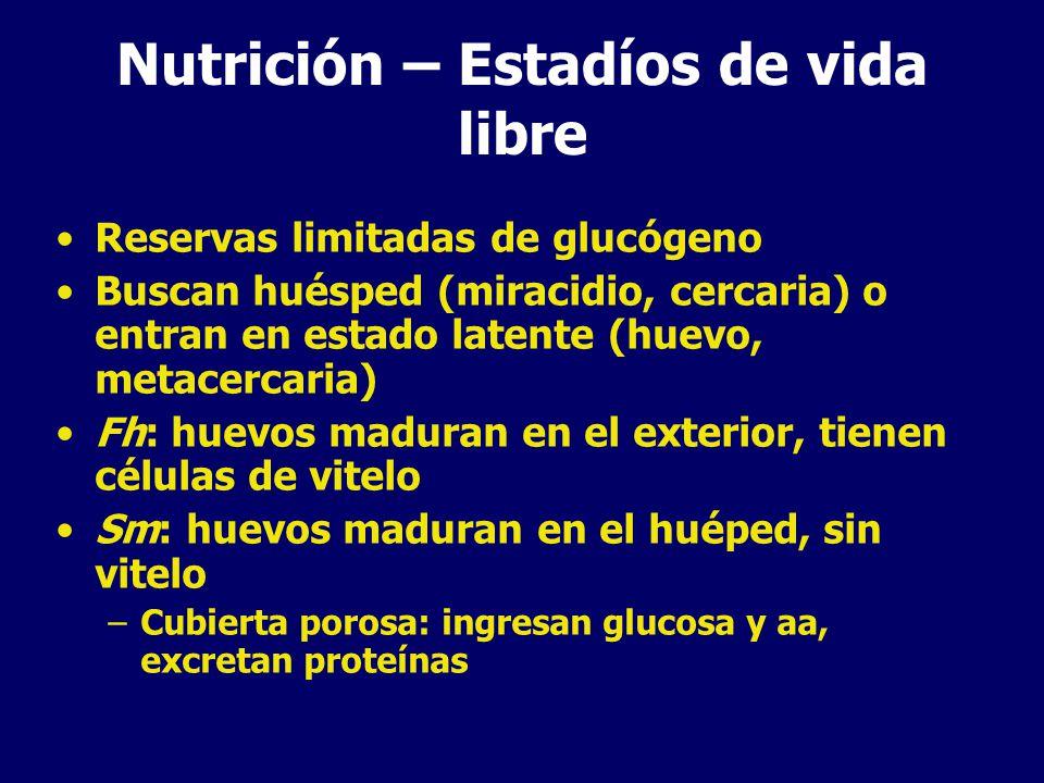 Nutrición – Estadíos de vida libre Reservas limitadas de glucógeno Buscan huésped (miracidio, cercaria) o entran en estado latente (huevo, metacercaria) Fh: huevos maduran en el exterior, tienen células de vitelo Sm: huevos maduran en el huéped, sin vitelo –Cubierta porosa: ingresan glucosa y aa, excretan proteínas