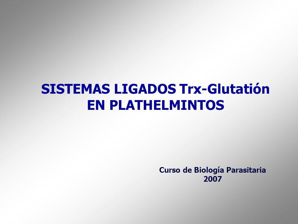 SISTEMAS LIGADOS Trx-Glutatión EN PLATHELMINTOS Curso de Biología Parasitaria 2007