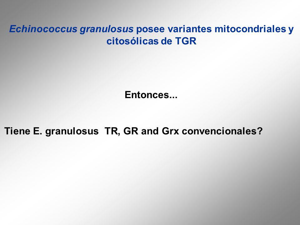 Echinococcus granulosus posee variantes mitocondriales y citosólicas de TGR Entonces... Tiene E. granulosus TR, GR and Grx convencionales?