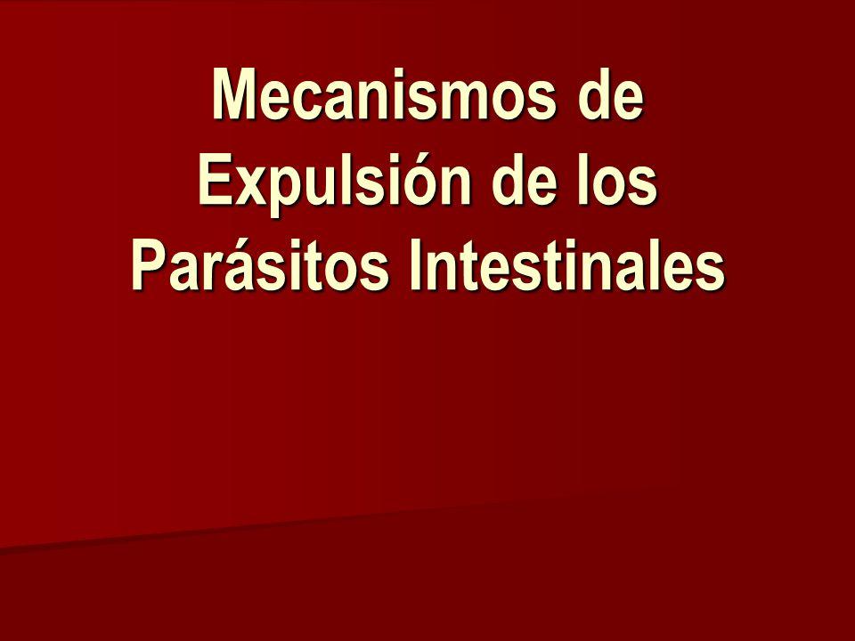 Mecanismos Efectores Mastocitos Mastocitos Células caliciformes – mucus Células caliciformes – mucus Eosinófilos Eosinófilos Anticuerpos Anticuerpos Efectos fisiológicos Efectos fisiológicos Inflamación intestinal Inflamación intestinal