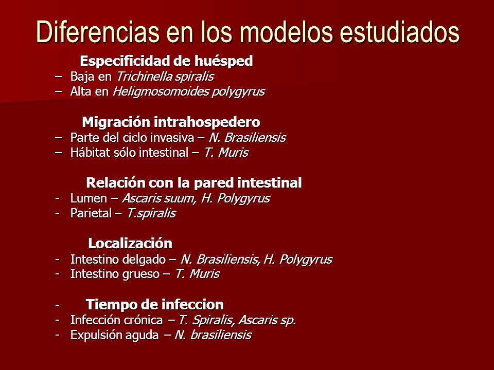 Diferencias en los modelos estudiados Especificidad de huésped –Baja en Trichinella spiralis –Alta en Heligmosomoides polygyrus Migración intrahospedero Migración intrahospedero –Parte del ciclo invasiva – N.