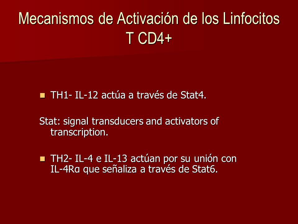 Mecanismos de Activación de los Linfocitos T CD4+ TH1- IL-12 actúa a través de Stat4.