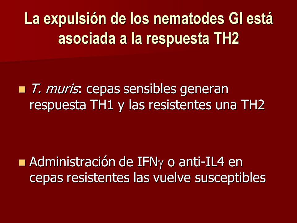 La expulsión de los nematodes GI está asociada a la respuesta TH2 T.