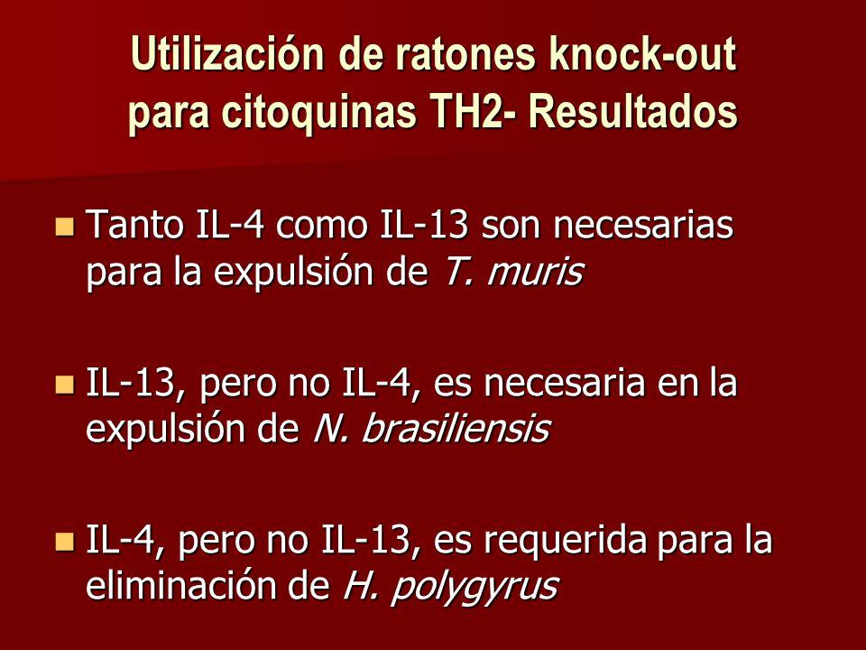 Utilización de ratones knock-out para citoquinas TH2- Resultados Tanto IL-4 como IL-13 son necesarias para la expulsión de T.