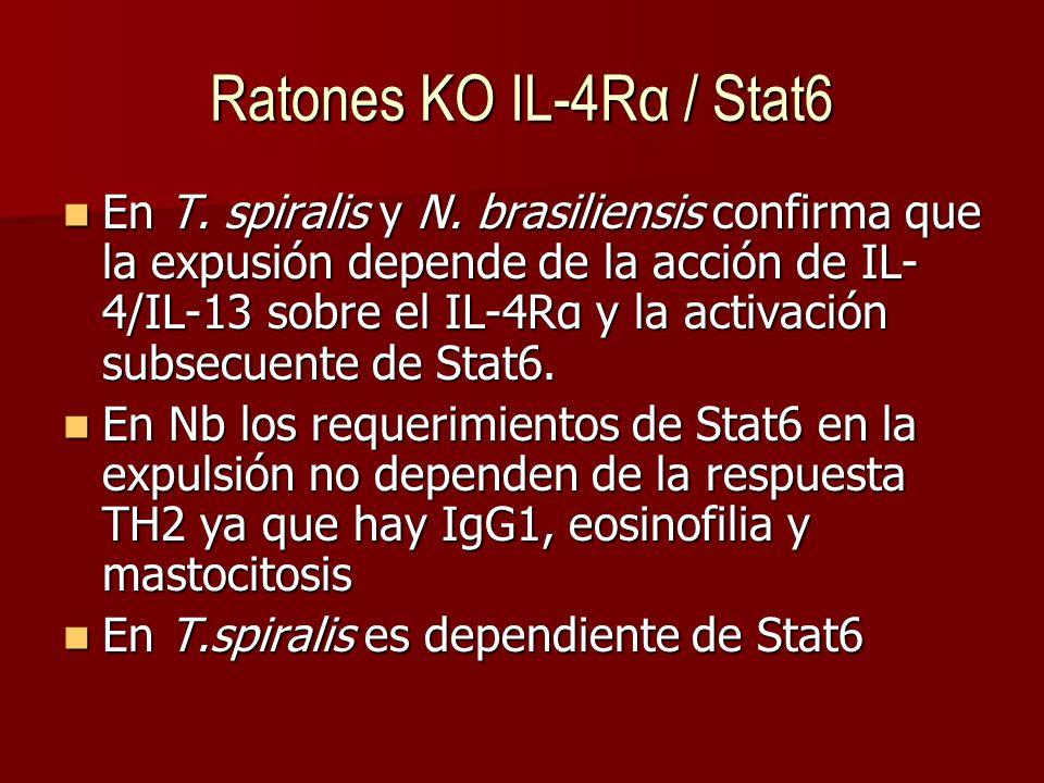 Ratones KO IL-4Rα / Stat6 En T.spiralis y N.