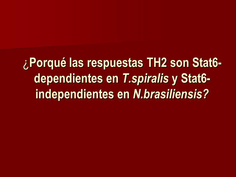 ¿ Porqué las respuestas TH2 son Stat6- dependientes en T.spiralis y Stat6- independientes en N.brasiliensis?