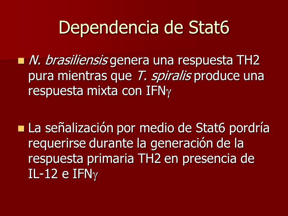 Dependencia de Stat6 N.brasiliensis genera una respuesta TH2 pura mientras que T.