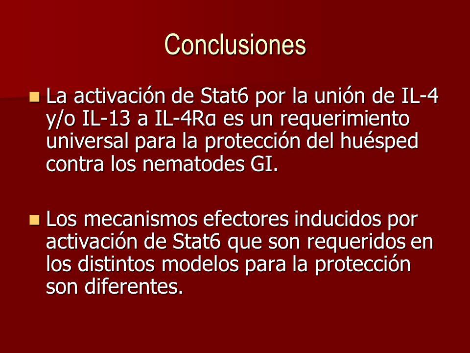 Conclusiones La activación de Stat6 por la unión de IL-4 y/o IL-13 a IL-4Rα es un requerimiento universal para la protección del huésped contra los nematodes GI.