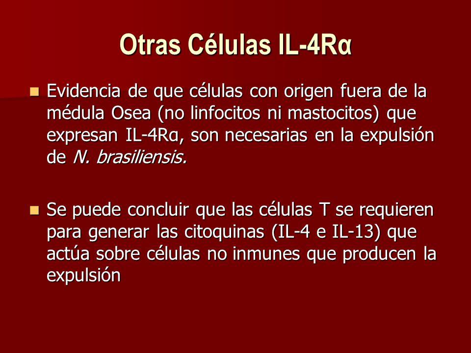 Otras Células IL-4Rα Evidencia de que células con origen fuera de la médula Osea (no linfocitos ni mastocitos) que expresan IL-4Rα, son necesarias en la expulsión de N.