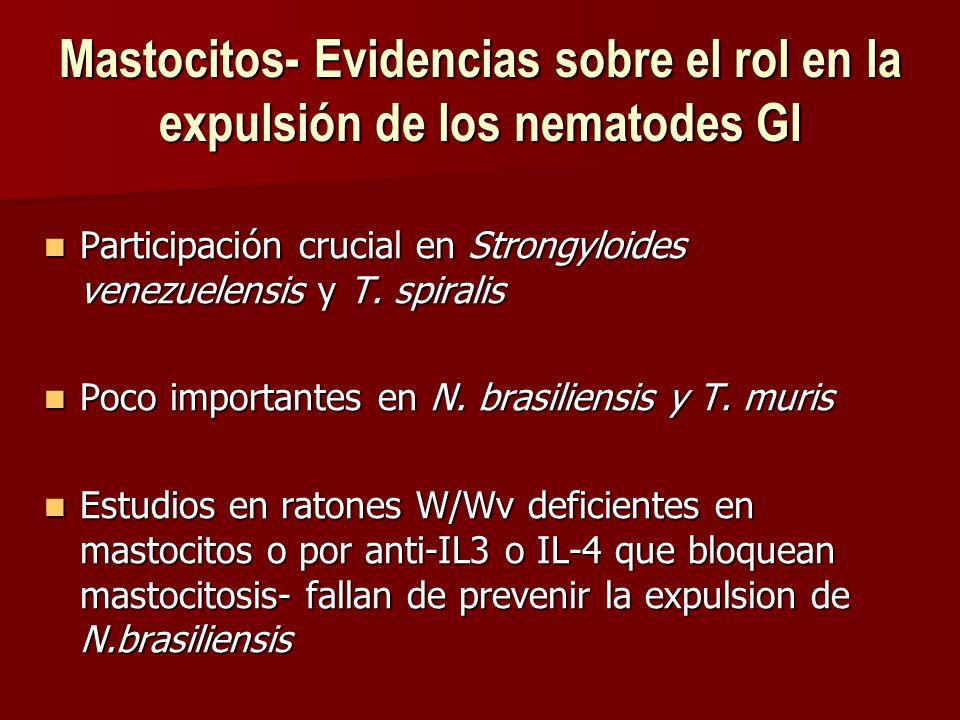 Mastocitos- Evidencias sobre el rol en la expulsión de los nematodes GI Participación crucial en Strongyloides venezuelensis y T.