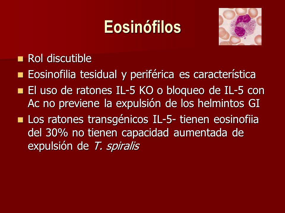 Eosinófilos Rol discutible Rol discutible Eosinofilia tesidual y periférica es característica Eosinofilia tesidual y periférica es característica El uso de ratones IL-5 KO o bloqueo de IL-5 con Ac no previene la expulsión de los helmintos GI El uso de ratones IL-5 KO o bloqueo de IL-5 con Ac no previene la expulsión de los helmintos GI Los ratones transgénicos IL-5- tienen eosinofiia del 30% no tienen capacidad aumentada de expulsión de T.