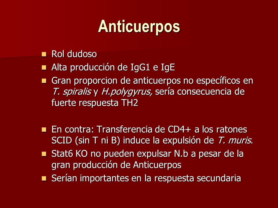 Anticuerpos Rol dudoso Rol dudoso Alta producción de IgG1 e IgE Alta producción de IgG1 e IgE Gran proporcion de anticuerpos no específicos en T.